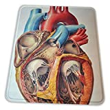 Gaming Mouse Pad - Human Anatomy Heart Rectangle Rubber Mousepad - 7.9 X 9.5 in X 0.12''(3mm Thick) Mouse Mat for Gift Support Wired Wireless Or Bluetooth Mouse