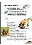 Was ist was, Band 128: Hamster, Biber und andere Nagetiere - 5