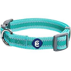 Blueberry Pet Essentials Reflective Back to Basics Adjustable Dog Collar, Minty Green, Medium, Neck 14.5″-20″