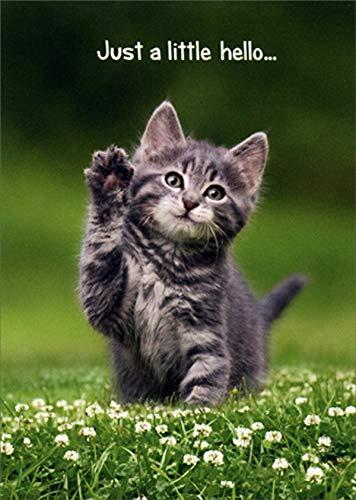 Avanti Kitten Hello Friendship Card