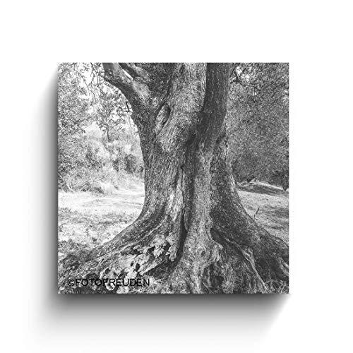 Olivenbaum, Italien Bilder, schwarz weiß Foto auf Holz, Handmade, Holzbild, verschiedene Größen
