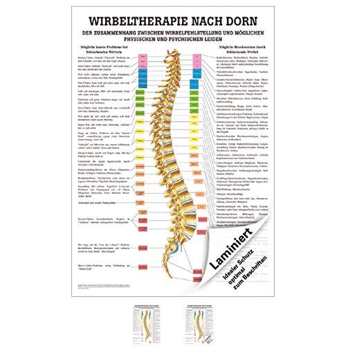 Wirbeltherapie nach Dorn Poster Anatomie 70x50 cm medizinische Lehrmittel