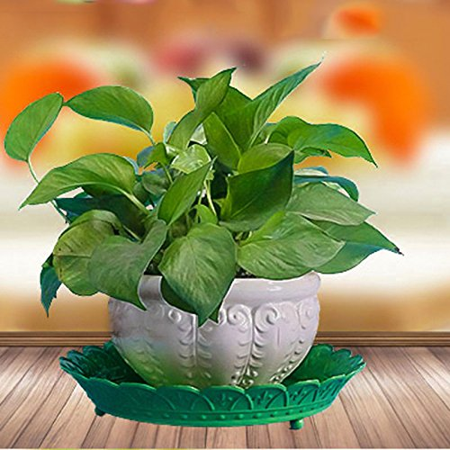 JM Corbeille à fruits en fer forgéEuropean home mode stockage plateau bureau bureau fleur rack rond fleur pot plateau