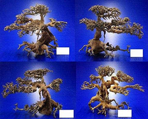 WFW wasserflora Aqua-Bonsai Wurzel Medium - Aquascaping Drachenbaum Traumwurzel Mittel