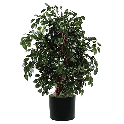 Vickerman TXX0740-06 Everyday Sakaki Bush, Green Dark, 4'