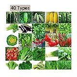Maylai 40 tipos de semillas de hortalizas de herencia y seguridad no OGM