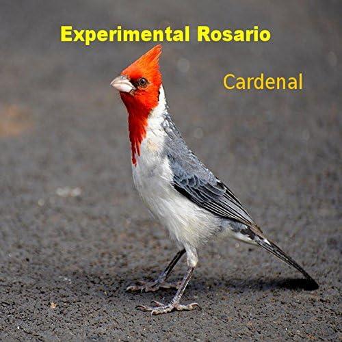 Experimental Rosario