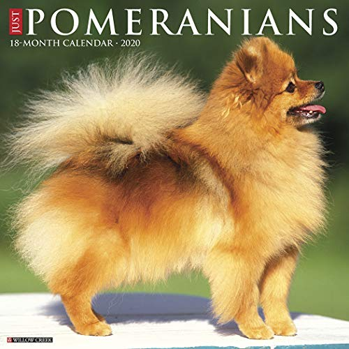 Just Pomeranians 2020 Wall Calendar (Dog Breed Calendar)
