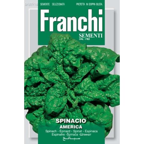 FRANCHI SEMENTI Spa Spinacio America