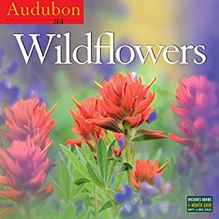 Audubon Nature Wall Calendar 2016 (2016 Calendar) by National Audubon Society (2015-08-04)