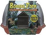 DuneCraft Windowsill Greenhouses Banana Plants