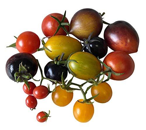 Mélange de graines de tomates sucrées Rendement élevé & Très sucré 5 styles de Samenchilishop