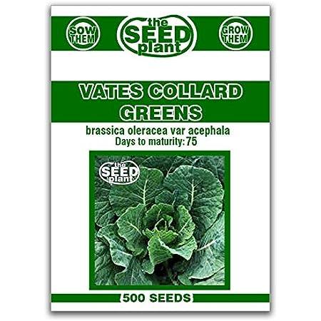 seeds discount garden seed Georgia Collard seeds 14 teaspoon 300