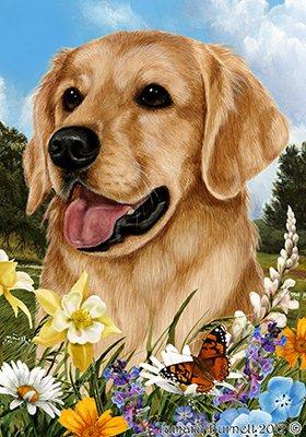 Best of Breed Golden Retriever - pavillons de jardin de fleurs d'été