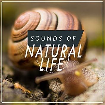 Sounds of Natural Life
