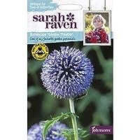 【輸入種子】 Johnsons Seeds Sarah Raven Brilliant for Bees & Butterflies Echinops ritro=GlobeThistle サラ・レイブン・ビー&バタフライ エキノプス(ルリタマアザミ)・リトロ=グローブ・シスル ジョンソンズシード