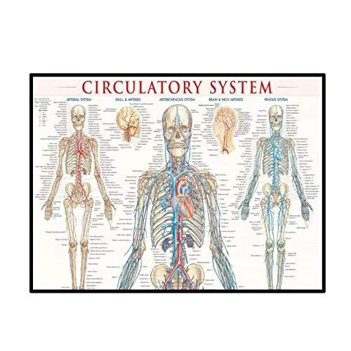 Swarouskll Diagrama del sistema circulatorio humano Póster