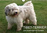 Tibet-Terrier - Eine Hunderasse mit Charakter (Wandkalender 2021 DIN A4 quer)