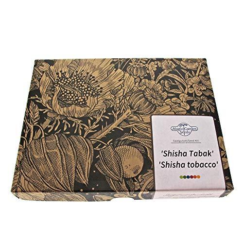 Shisha Tabak - Samen-Geschenkset mit 3 Tabaksorten für Wasserpfeifentabak-Mischungen