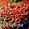 Portal Cool Promo 200 Semi Nertera Granadensis, Perlina per Lampada Semi di Erba, Tasso di germinazione 95% #1