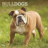 Bulldogs - Bulldoggen 2020 - 16-Monatskalender mit freier DogDays-App: Original BrownTrout-Kalender [Mehrsprachig] [Kalender] (Wall-Kalender) - BrownTrout Publisher