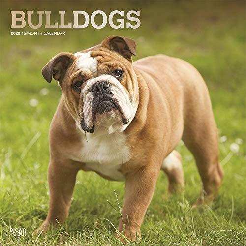 Bulldogs - Bulldoggen 2020 - 16-Monatskalender mit freier DogDays-App: Original BrownTrout-Kalender [Mehrsprachig] [Kalender] (Wall-Kalender)