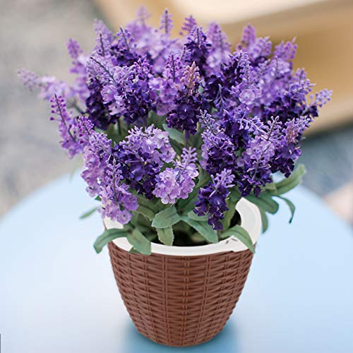Dooreemee Lavender Plant,DIY Mini Lazy Flower Pot, Automatic Water Absorption Funny Potted Plant with high Grade for Cultivating Kid's Planting Hobbies and Decorating Home & Office