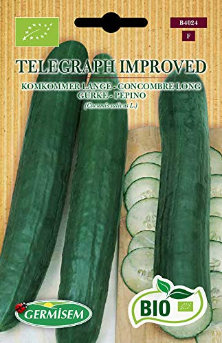 Germisem Orgánica Telegraph Improved Semillas de Pepino 5 g