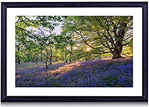 English Bluebells Flowers - Art Print Black Wood Framed Wall Art Picture For Home Decoration