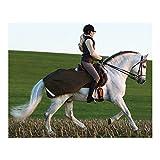 Horseware AMIGO Competition Sheet Ausreitdecke Trainingsdecke (150cm)