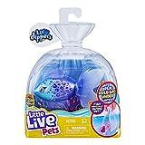 Little Live Pets 26157 - Pacco singolo Lil' Dippers di Little Live Pets con effetto 'Wow' quando si apre in acqua e cibo interattivo