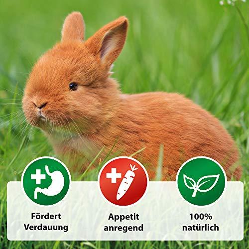 Röhnfried Darmwohl Nahrungsergänzung (250 ml) für Nager, Geflügel & Kleintiere, geförderte Verdauung & erleichterte Aufzucht, mit Oregano & Bartflechte - 4