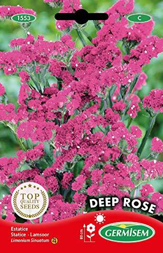Germisem Deep Rosa Semillas de Statice 0.5 g