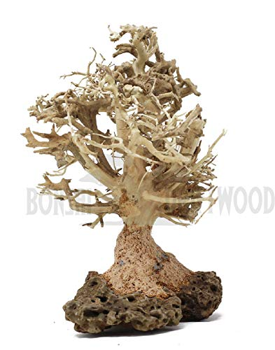 Bonsai Driftwood Aquarium Tree (7 Inch Height) Natural, Handcrafted Fish Tank Decoration | Helps Balance Water pH Levels, Stabilizes Environments | Easy to Install | BBS