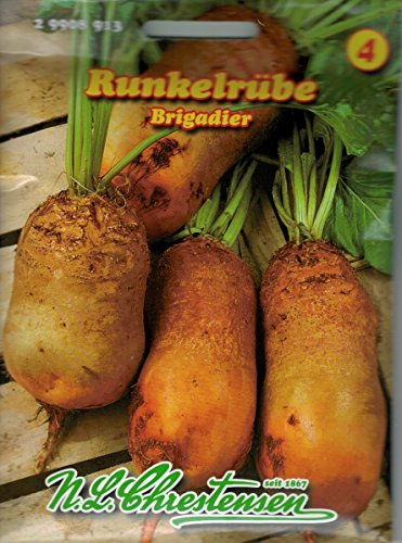 Runkelrübe 'Brigadier' orangefarbig, wertvolle und leistungsstarke Futterpflanze , Futterrübe