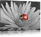 illuminée Ladybird rouge sur fleur noir / blanc Taille: 60x40 sur toile, XXL énormes Photos complètement encadrées avec civière, impression d'art sur murale avec cadre, moins cher que la peinture ou la peinture à l'huile, pas une affiche ou une bannière,
