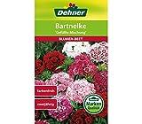 Dehner Blumen-Saatgut, Bartnelke, 'Gefüllte Mischung', 5er pack (5 x 1.3 g)