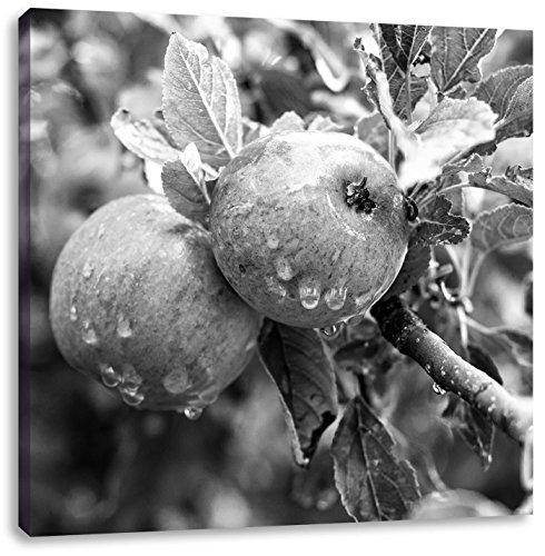 Heerlijke wilde appelen art B & WCanvas Foto Plein | Maat: 40x40 cm | Wanddecoraties | Kunstdruk | Volledig gemonteerd