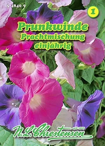 Pharbitis purpurea, Prunkwinde, Prachtmischung N.L.Chrestensen Samen 548409-B