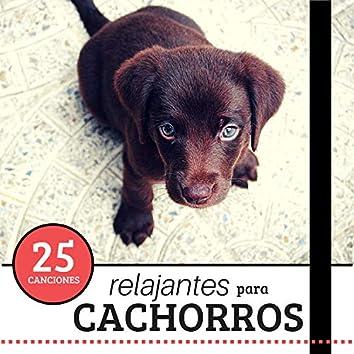 25 Canciones Relajantes para Cachorros - La Mejor Música Tranquilizante para los Perros Bebes