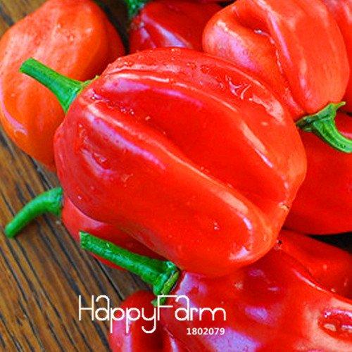 100 particules/Lot Géant de tomate semences, Semis de légume balcon en pot pourpre tomate facile de cultiver