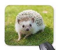 ハリネズミのマウスパッド 2:フォトパッド( 世界の野生動物シリーズ )
