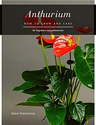 Anthurium: How to grow and care