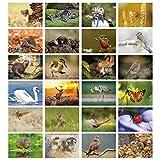 Pack of 24 British Wildlife Gree...