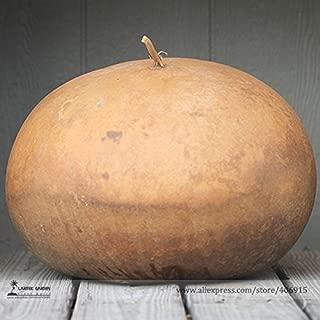 TopOne Sales Giant African Bushel Basket Gourd Lagenaria Siceraria Seeds, Professional Pack, 10 Seeds / Pack