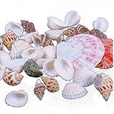 100g Onsinic mixtos conchas de mar Shell mezcla Craft Conchas Inicio acuario náutico de la decoración