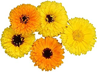 Calendula Fiesta Gitana Seeds Edible Heirloom Pot Marigold #21 (4800 Seeds)