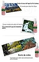 Plant Gift—Cedar Hydrosol—シダー純粋な露—100%、瘢痕再生を促進し、にきび肌、にきび、油性肌に適用する—50ml-1.69oz