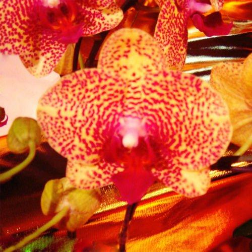 graines de fleurs pour les semences maison jardin Phalaenopsis orchidée acheter directe de-china orquidea semente 30PCS orchidée semences F96