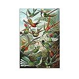 Nature Art Biology Birds Buzzing Ernst Haeckel - Póster retro alemán en lienzo, póster y arte para pared, diseño moderno de dormitorio familiar, 30 x 45 cm